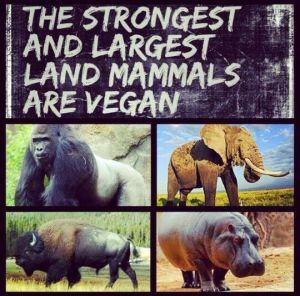 Vegan Animals